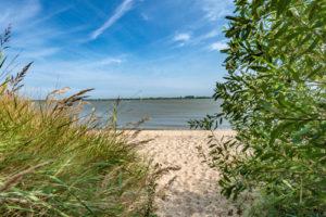 Die Elbinsel Krautsand im Sommer