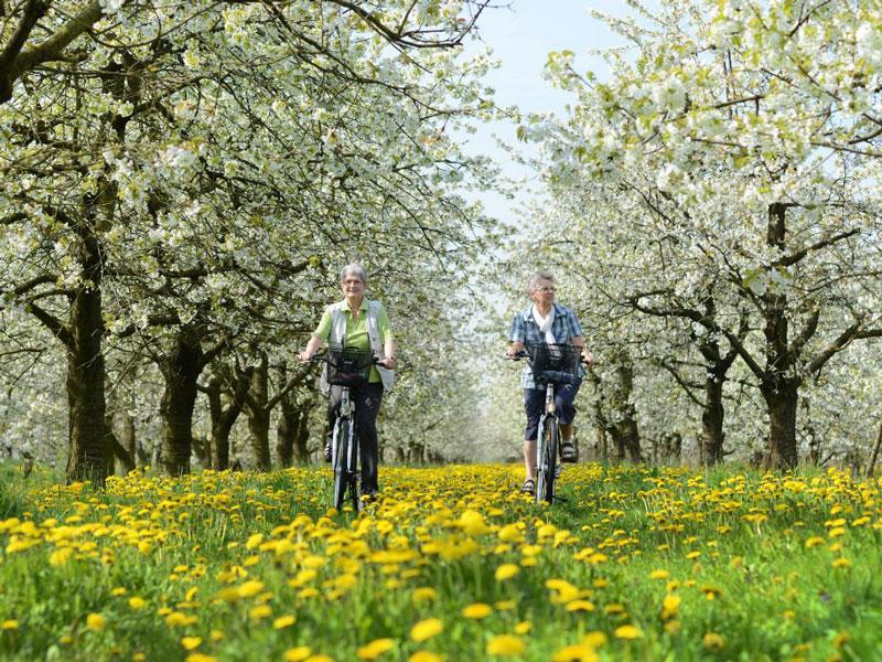 Die Elbinsel Krautsand - genießen Sie ihren Urlaub zwischen Obstbäumen