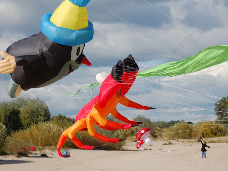Die Elbinsel Krautsand - Drachenfest auf Krautsand im Herbst