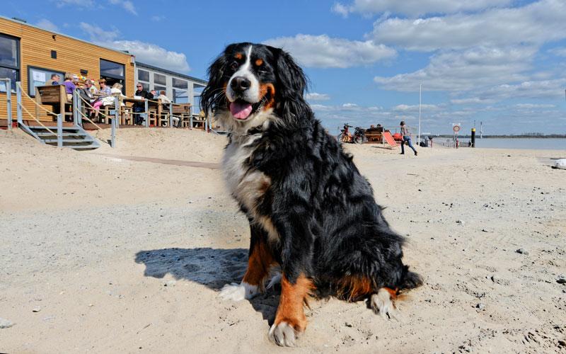 Urlaub mit Hund auf Krautsand