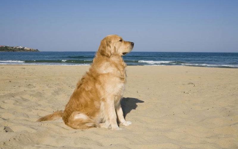 Urlaub mit Hunde am Wasser