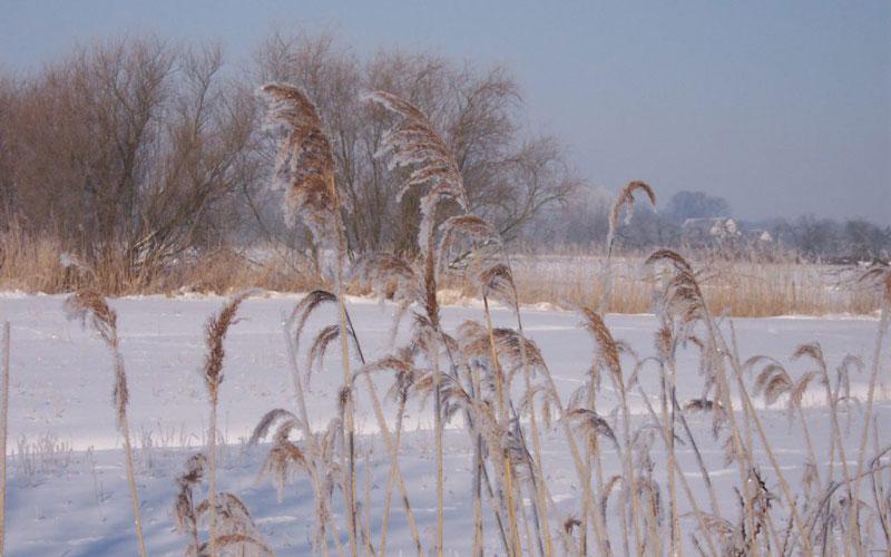 Die Elbinsel Krautsand im Winter